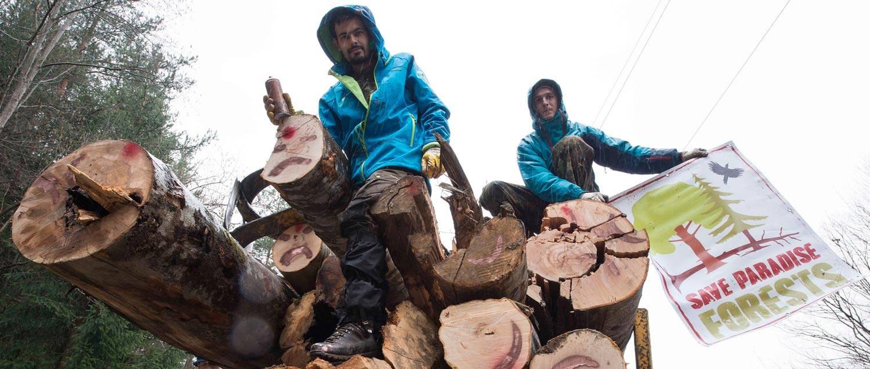 Precizarile Romsilva in urma protestului activistilor de mediu in judetul Arges