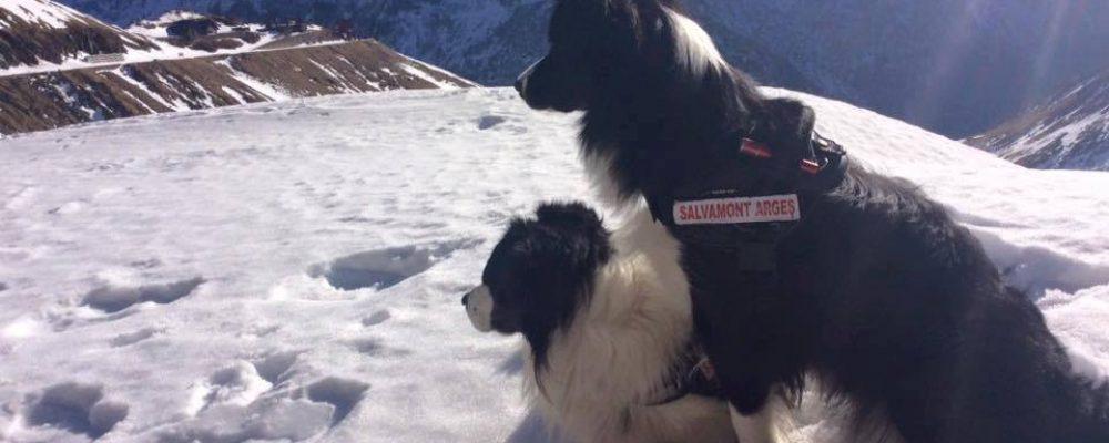 Evaluarile nationale ale echipajelor canine se vor desfasura la Cota 2000